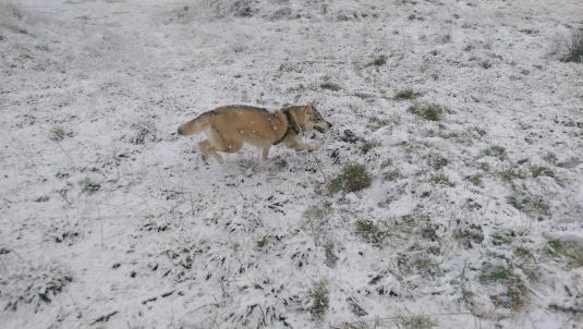 snow-dogs-quarry (8)